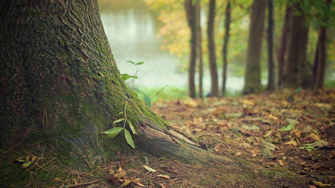 Árboles adultos alimentan y cuidan de los pequeños