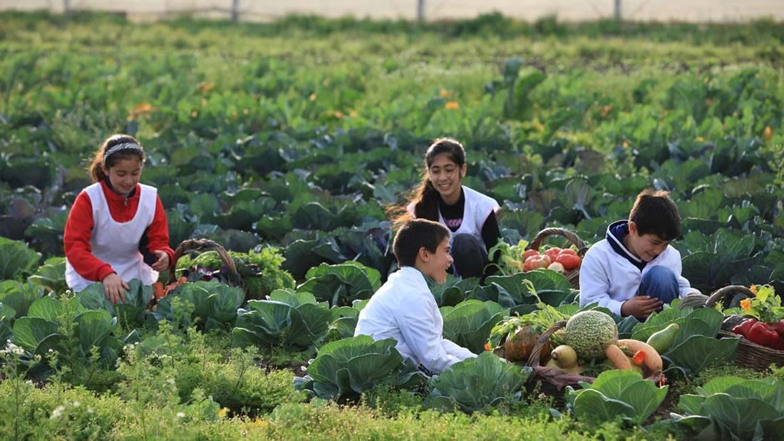 Cómo cultivar tus propios alimentos: asignatura obligatoria en colegios