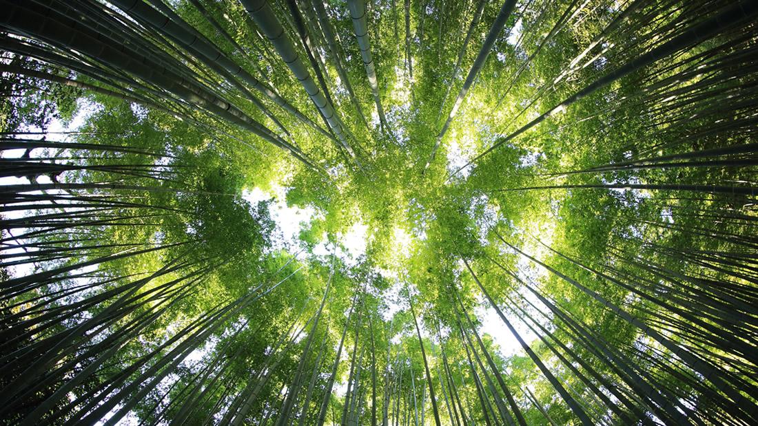 Reforestar el planeta con más de 500.000 millones de árboles: el nuevo reto de los científicos