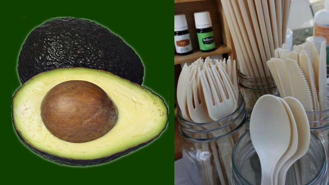 Joven usa semillas de aguacate para crear utensilios biodegradables