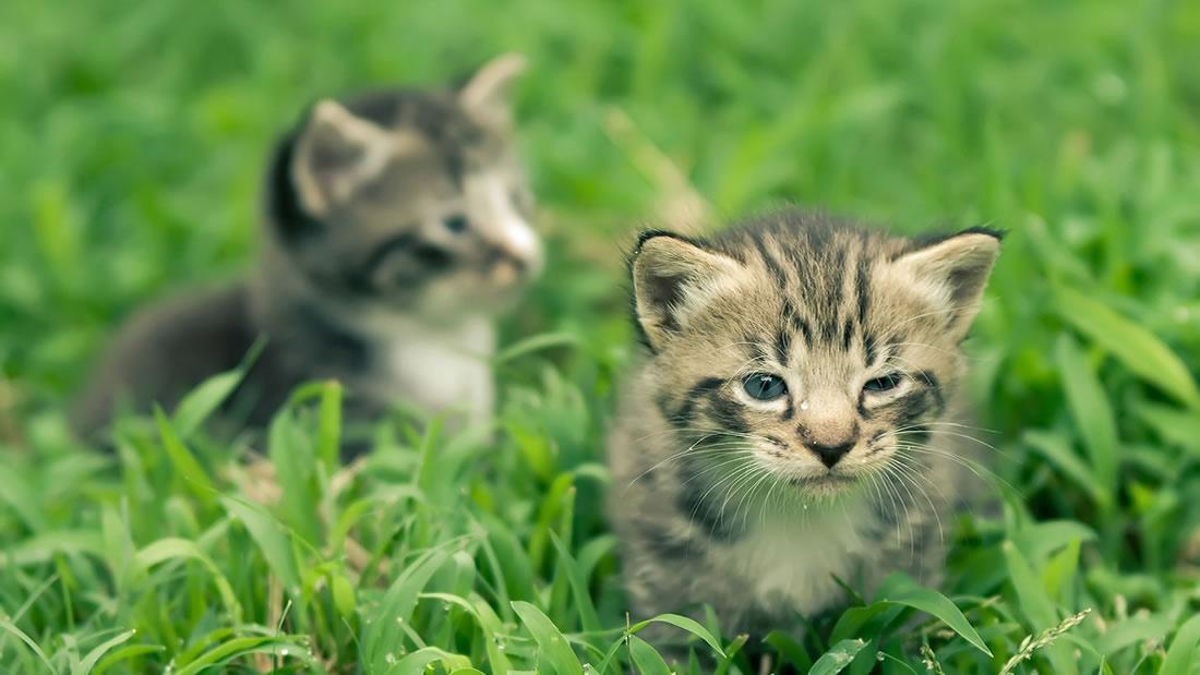 ¿Por qué tu gato come hierba?