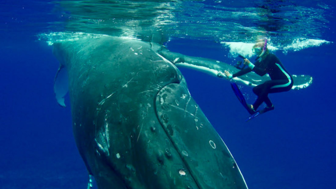 Ballena protege a una mujer y la salva de morir atacada por un tiburón