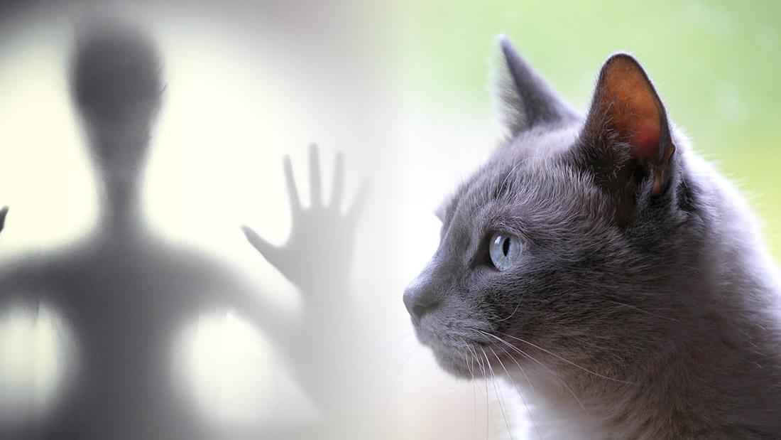 Cómo los gatos nos protegen de espíritus malignos