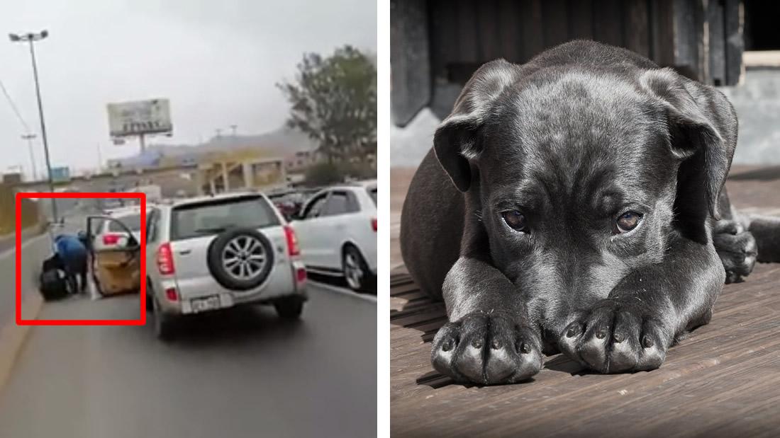 Conductores se unen y salvan a perrito que iba a ser atropellado en autopista (Vídeo)