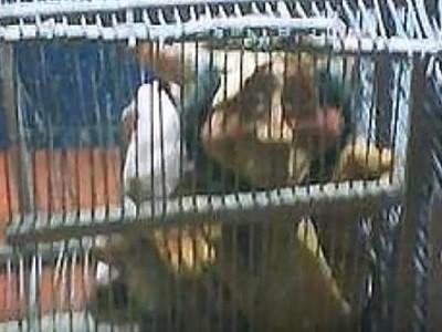 Supuesto Duende capturado en Argentina