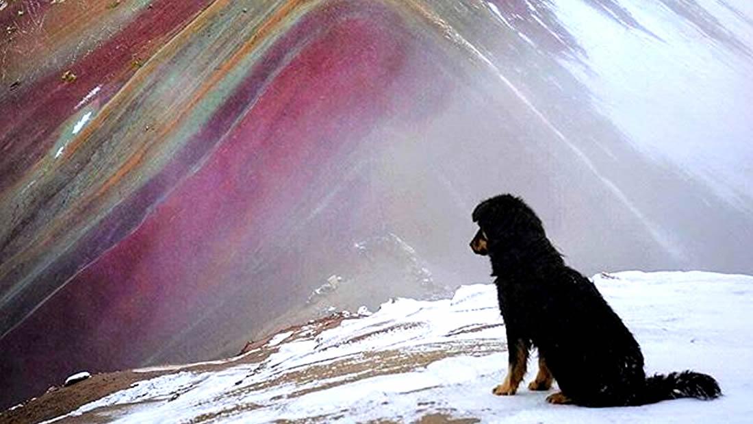 Él es «Doc», el perro guía en la Montaña de los Siete Colores en Cusco, Perú