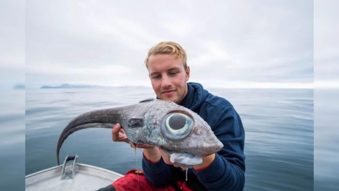 Pescador halla un extraño pez «alienígena» en isla de Noruega