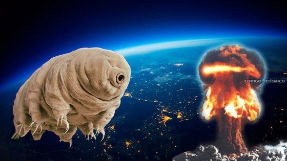 Los tardígrados podrían sobrevivir a un ataque nuclear. Ahora sabemos por qué