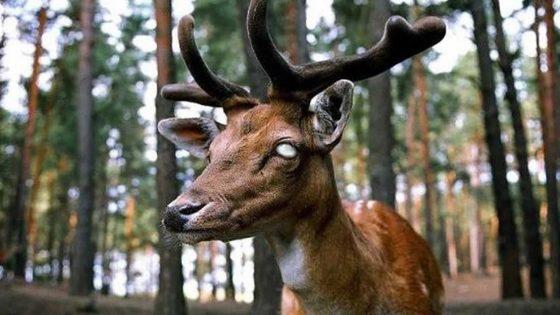 Nevada se encuentra en alerta máxima por enfermedad del «ciervo zombie»