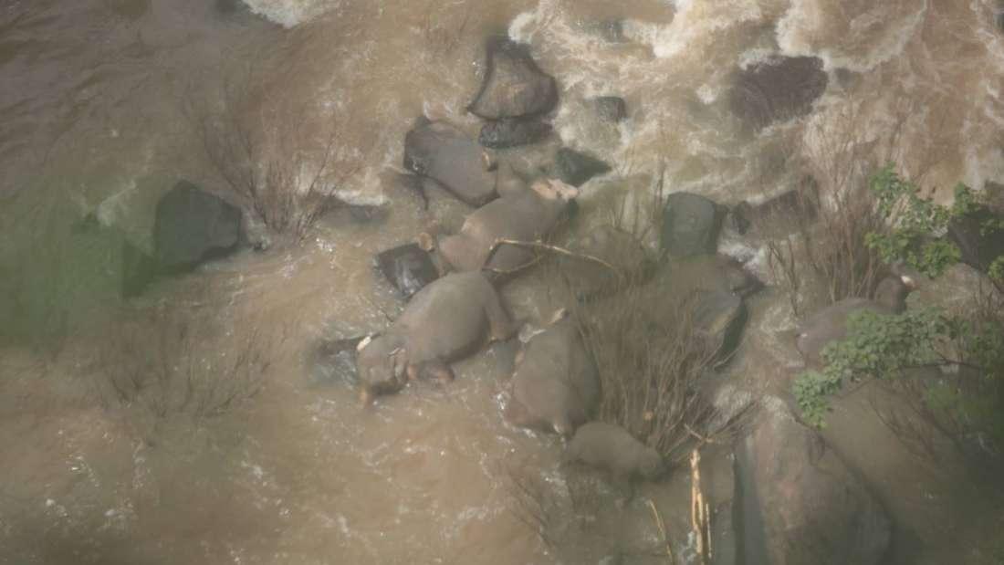 Once elefantes mueren ahogados tratando de salvarse unos a otros en una cascada en Tailandia