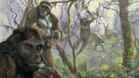 Hallan fósiles de un antiguo simio con «piernas humanas» y brazos de orangután diferente a cualquier otra criatura