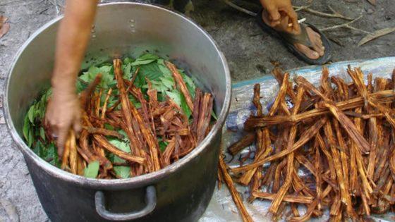 ¿Podría la ayahuasca ayudar a frenar los pensamientos suicidas? Primer ensayo clínico lo investiga