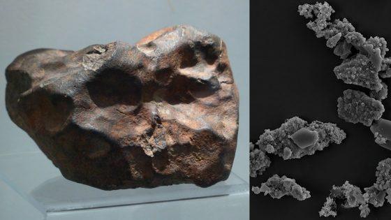 Identifican un organismo que se alimenta de meteoritos