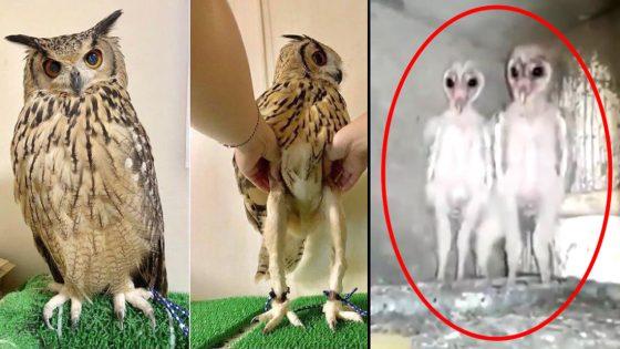 Este vídeo de crías de búhos podría explicar los avistamientos alienígenas