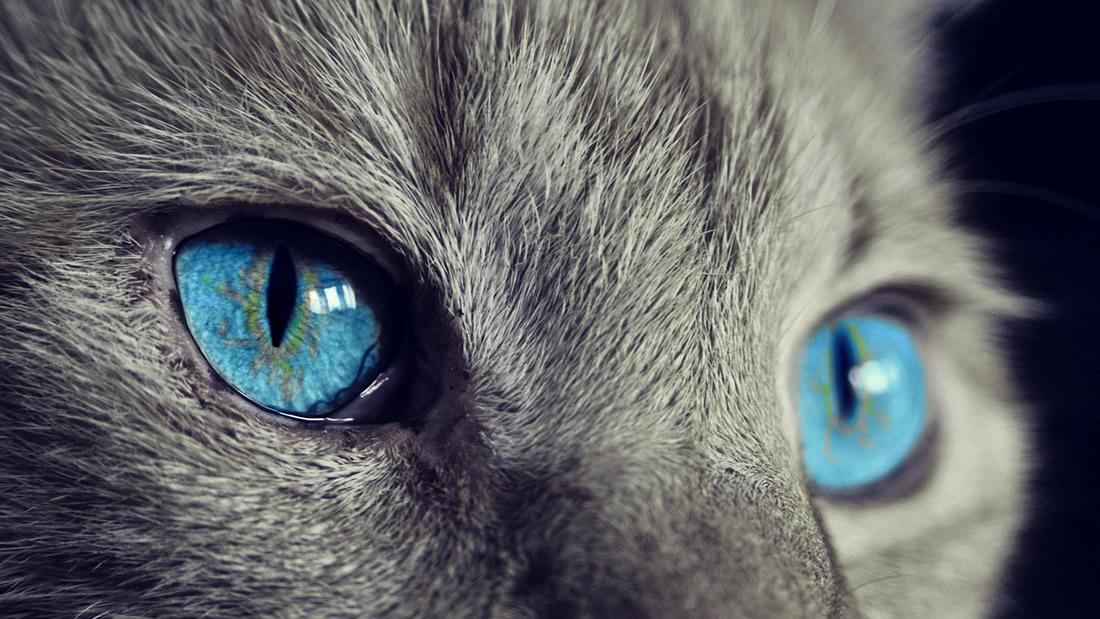 Nueva tecnología permite a los humanos «ver» el mundo a través de los ojos de los animales
