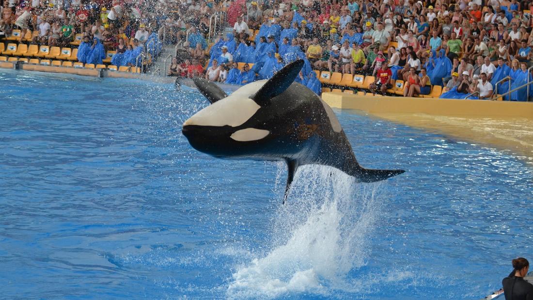Canadá prohíbe oficialmente cautiverio y la cría de ballenas y delfines