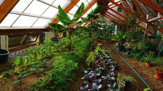 Walipinis: ingeniosas huertas subterráneas hechas en Bolivia que resisten el clima extremo
