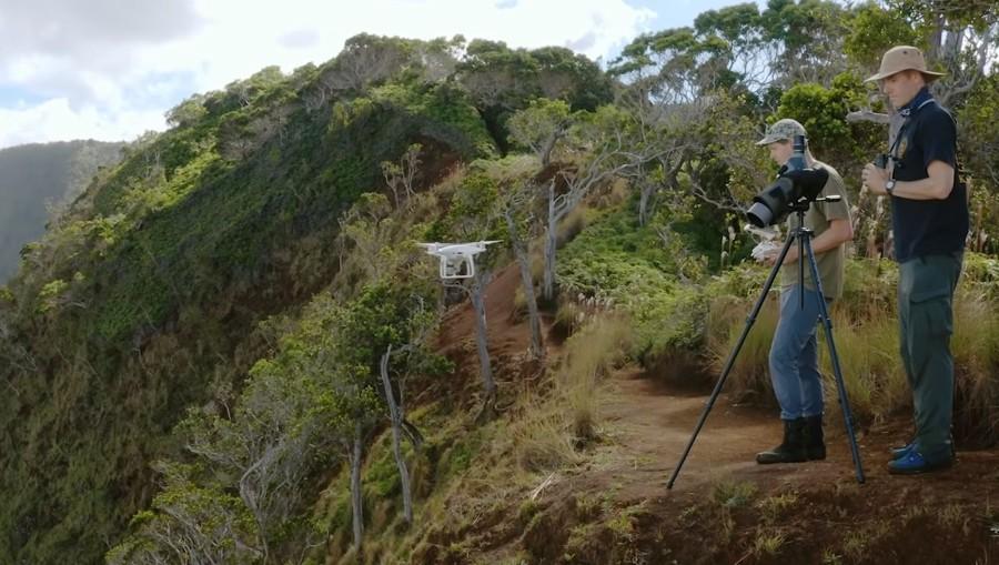 Botánicos están buscando plantas en peligro de extinción con drones, luego escalan acantilados para salvarlas (Vídeo)