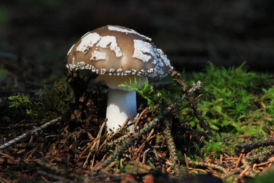Si no fuera por los hongos no estaríamos aquí