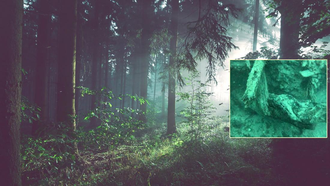 Bosque antiguo de 60.000 años permitiría desarrollar nuevos medicamentos de biotecnología