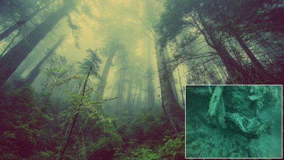 Bosque oculto de casi 60.000 años sumergido en el Golfo de México (Vídeo)