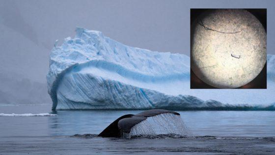 Encuentran microplásticos en la Antártida por primera vez