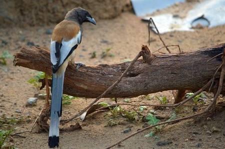 Aves «comen fuego» en un audaz acto de supervivencia