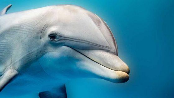 ¿Qué hace que los delfines jorobados sean diferentes? Esta bióloga india está descubriéndolo