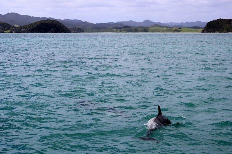 ¿Qué hace que los delfines jorobados sean diferentes? Esta bióloga está descubriéndolo