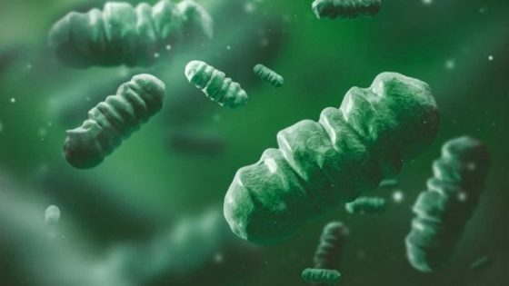Científicos diseñan bacterias fotosintéticas para producir hidrógeno