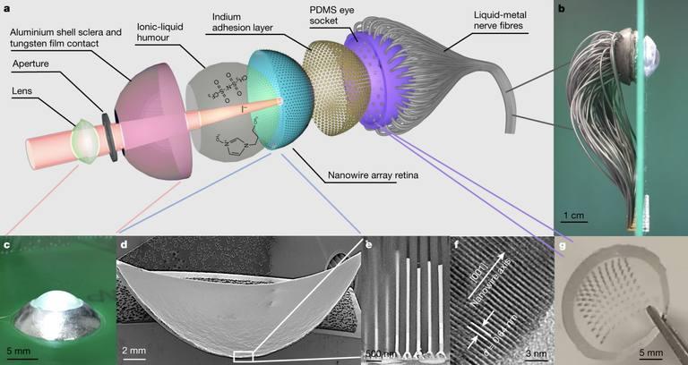 Científicos crean el ojo biónico más poderoso de la historia