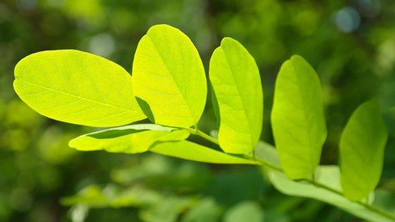 Científicos descubren cómo obtener energía utilizable de las plantas