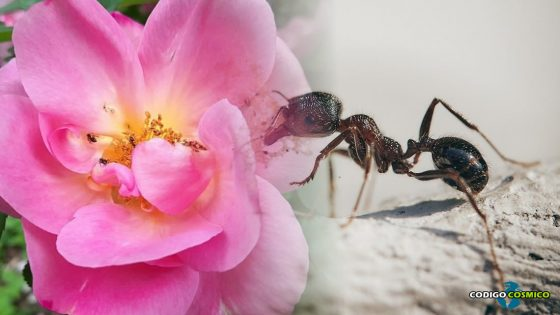Buenas noticias: ¡Las hormigas están polinizando!
