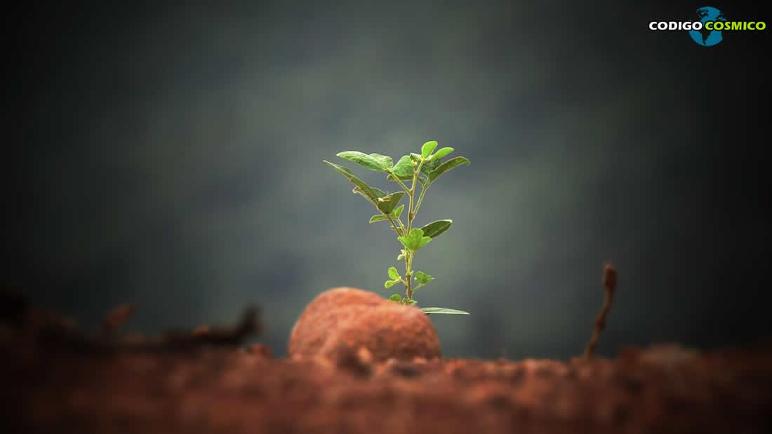 La importancia de las plantas en un mundo cada vez más cálido y seco