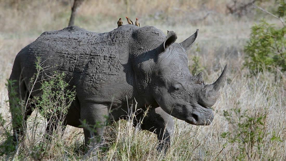 Más de 500 especies de animales en riesgo de una inminente «aniquilación biológica»