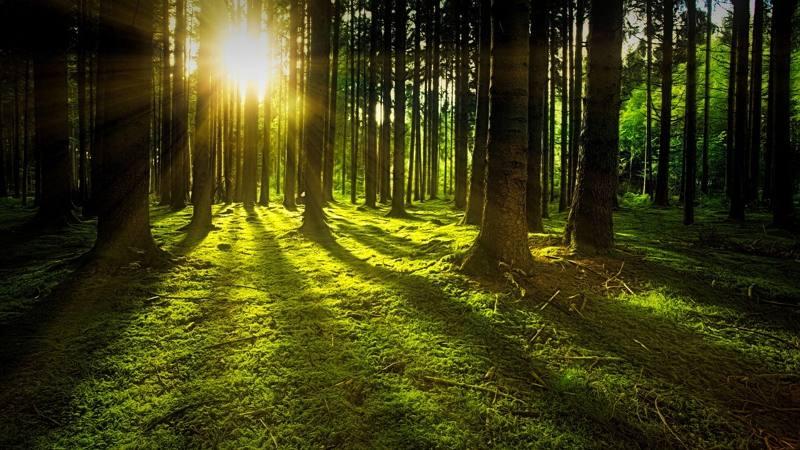 Científicos dicen que han descubierto cómo obtener energía utilizable de las plantas