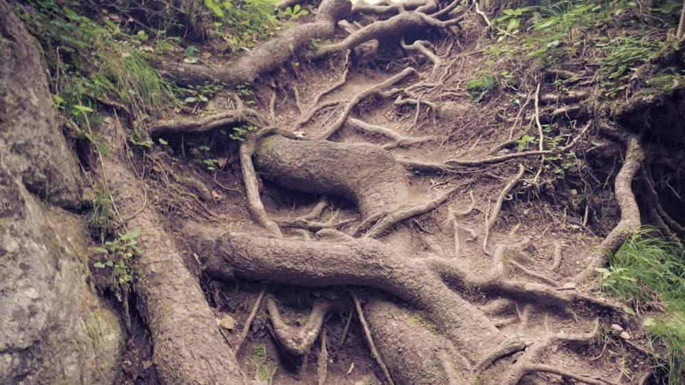 Estudio revela que las plantas pueden absorber plástico a través de sus raíces