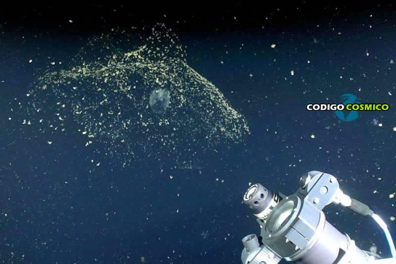Fascinante criatura marina contribuye a eliminar desechos del mar que calientan el planeta