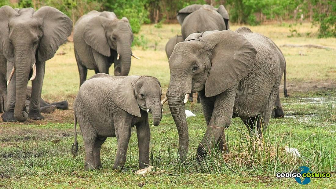 Nacen un par de raros gemelos elefantes por primera vez en Sri Lanka