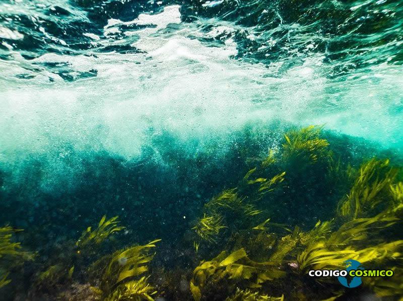 Nuevas y agresivas algas marinas están matando los arrecifes de coral en las islas hawaianas