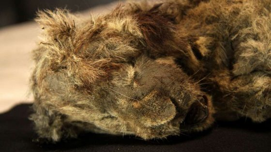 Cachorro de león de las cavernas extinto y congelado confirma que es una especie diferente del león moderno