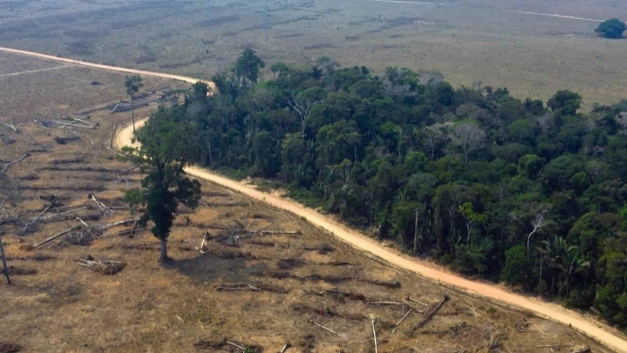 Destrucción del hábitat podría aumentar riesgo de enfermedades