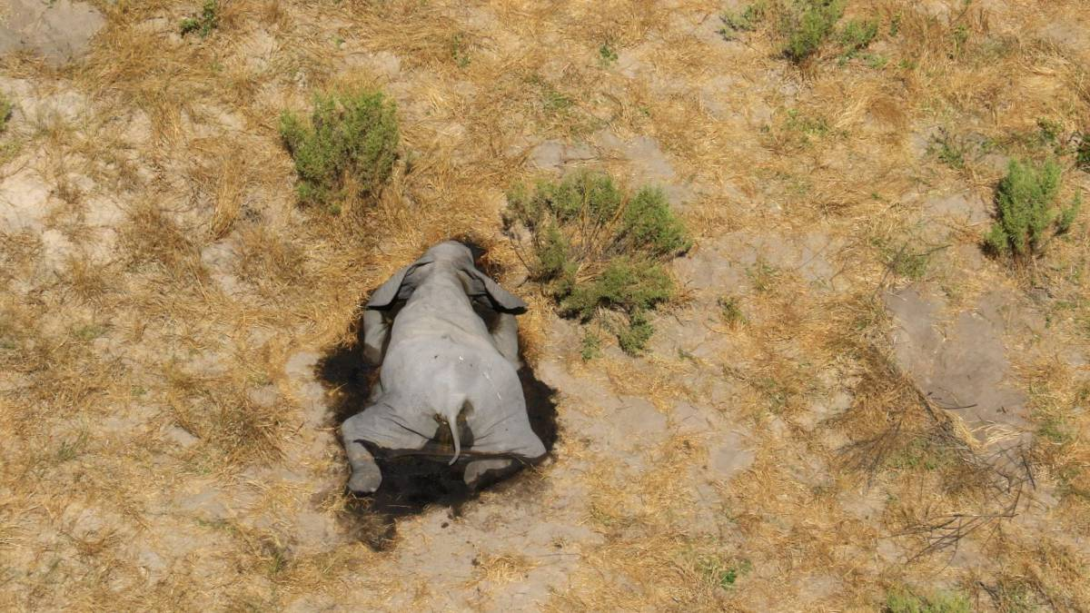 Misteriosa muerte de cientos de elefantes en Bostwana fue causada por envenenamiento con cianobacterias