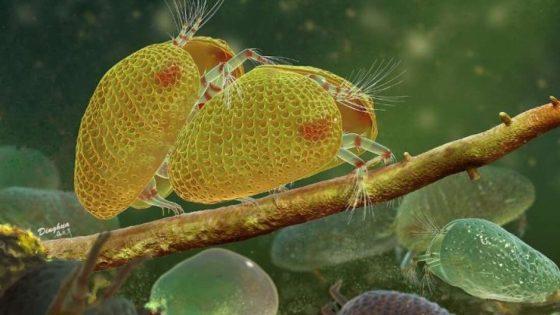 Hallan el esperma animal más antiguo del mundo atrapado en ámbar: 100 millones de años