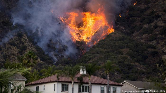 Bosques perdidos por incendios forestales en California nunca volverían a crecer