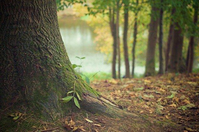 ¿Plantar un billón de árboles realmente salvaría a la Tierra?