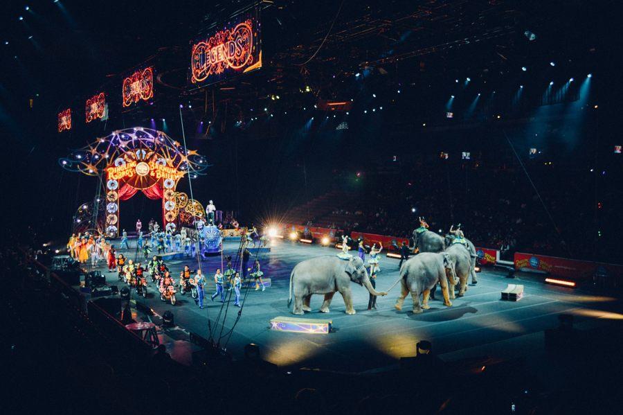 Francia prohibirá uso de animales silvestres en circos y la crianza para acuarios o zoológicos
