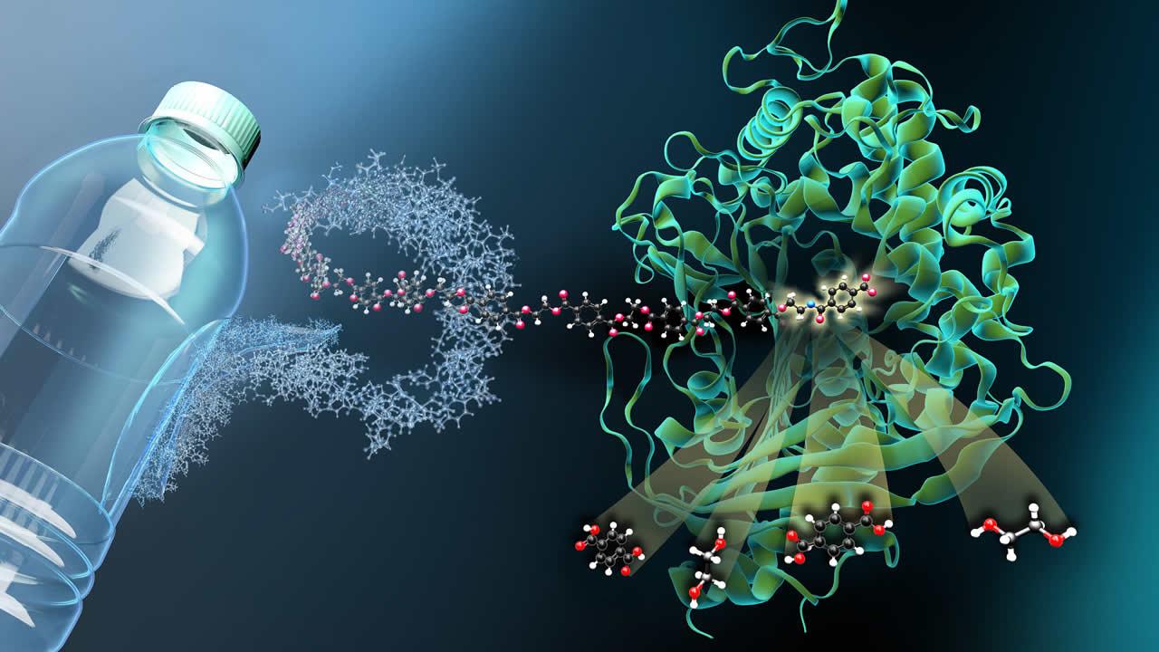 Híbrido de enzimas mutantes logra devorar plástico seis veces mejor