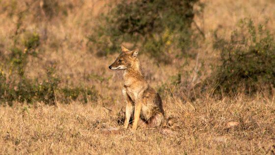 El 23% de hábitats naturales en grave riesgo de desaparecer para 2100