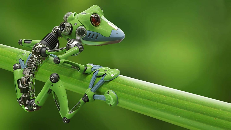 Xenobots: robots vivos creados a partir de células madres de rana